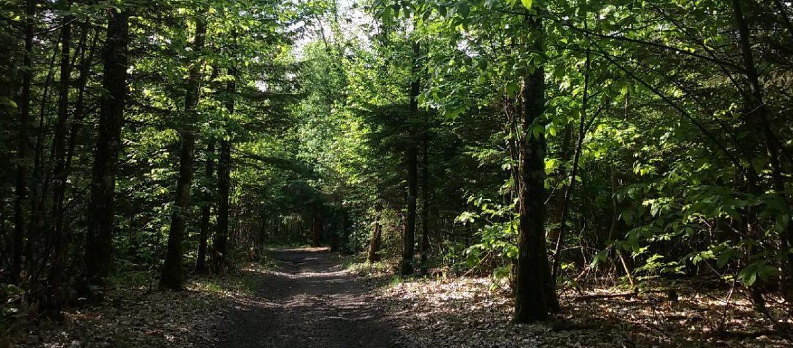 Forêt du Limousin